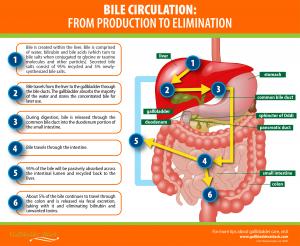 Are Bile Salts Worth Your Money? - Gallbladder Attack